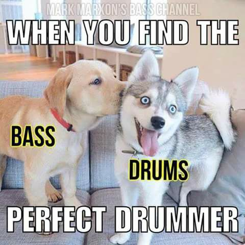 Perfect rhythm section dogs