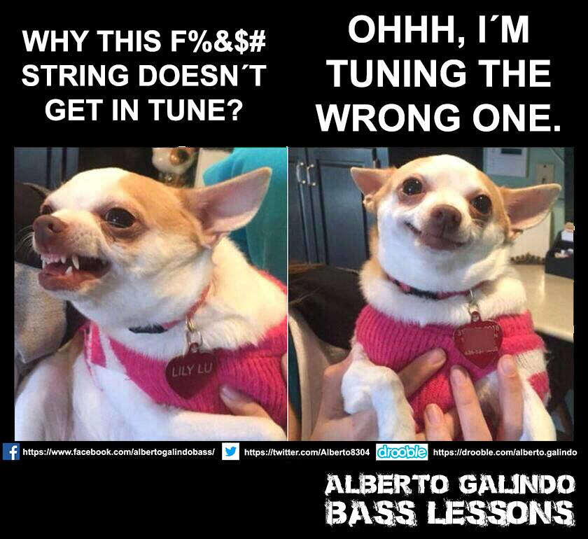 Tuning bass wrong dog